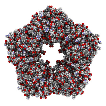 c реактивный белок