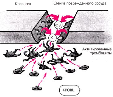 Процесс адгезии