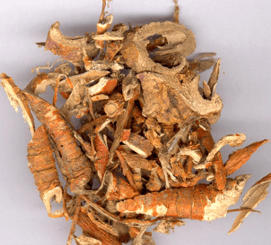 корень шелковицы