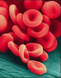 цветной показатель крови