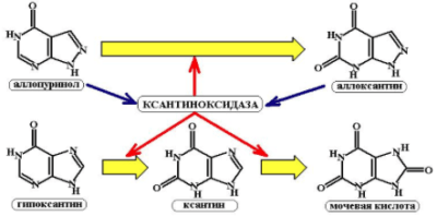 Препараты для выведения мочевой кислоты из организма при подагре
