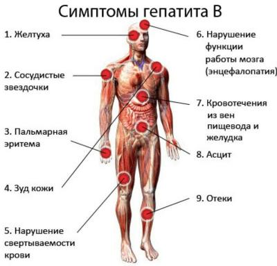 Кровь на гепатит с ттг