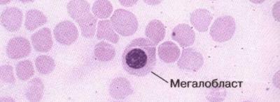 Что такое молодые клетки в анализе крови