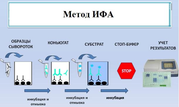 Анализ крови ифа на токсоплазму