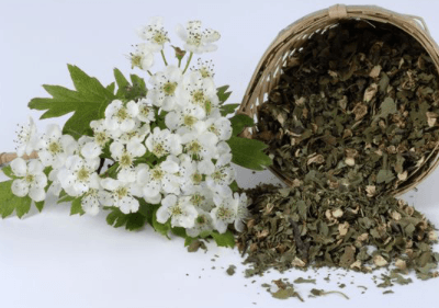 Травы улучшающие кровообращение головного мозга